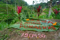 Надпись на рисовом поле