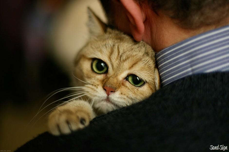 Погладь кота - посвящается всем хозяевам котов!